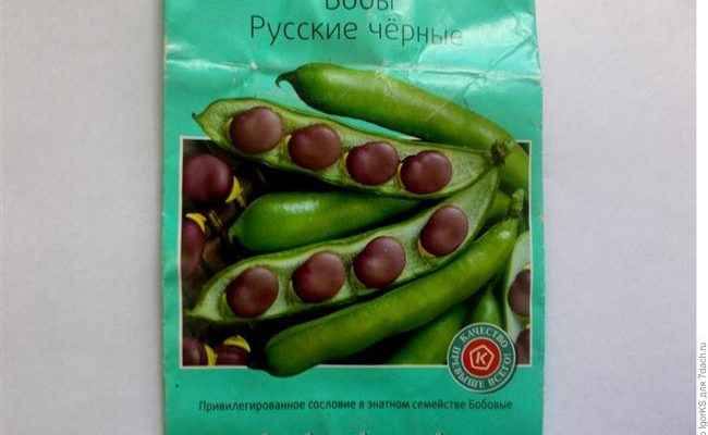 Бобы русские черные: особенности сорта и правила выращивания