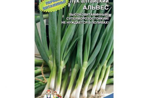Лук алтайский Альвес: описание и характеристика, полезные свойства и противопоказания, особенности выращивания и ухода, фото