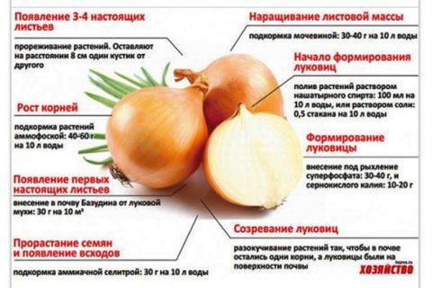 Лук сорта Альфа: характеристика и описание, агротехника выращивания, уход, фото