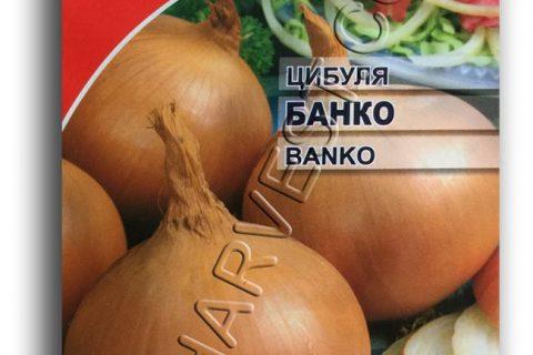 БАНКО F1 лук Сингента | Премьер-Агро