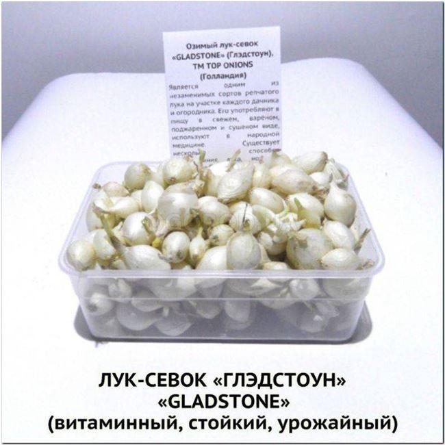 Лук Гледстоун GLADSTONE F1 10000с