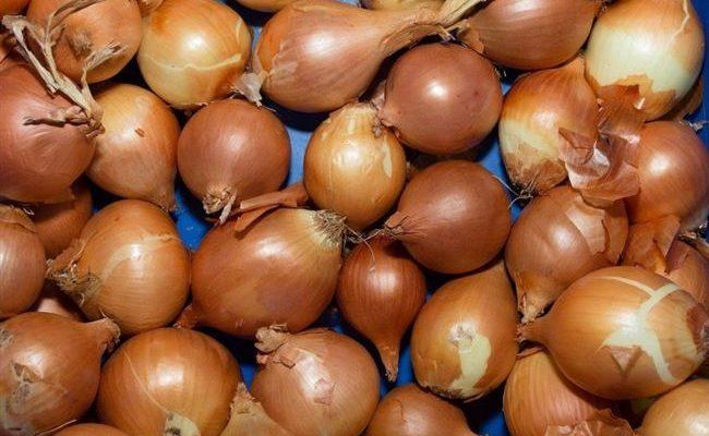 Голландский лук Купидо: описание сорта, выращивание, сбор и хранение урожая