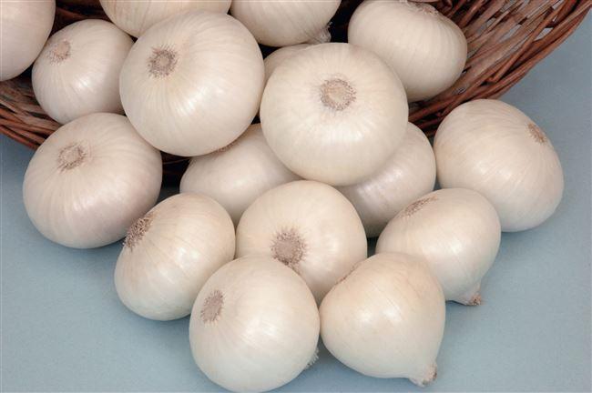 Леон семена лука репчатого среднего 120 дн. желтого (Bejo) НЕТ ТОВАРА