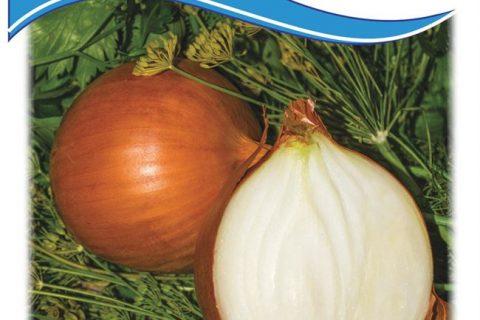 Лук Луганский: выращивание из семян на перо, описание репчатого сорта, отзывы
