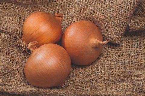 Песо — сорт растения Лук репчатый
