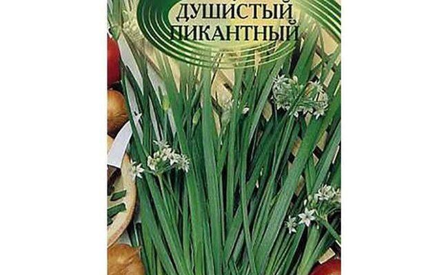 Щедрый на урожаи ароматной зелени — лук душистый Пикантный: выращивание, описание сорта