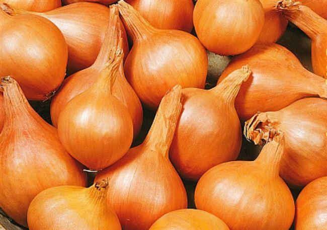 Огненно-красные плоды с идеальным вкусом — лук Прометей: описание сорта и отзывы