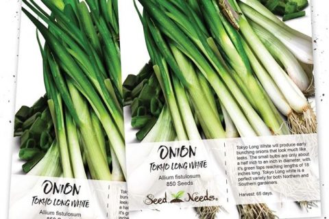 Лук Румба: описание сорта с фото, урожайность, отзывы