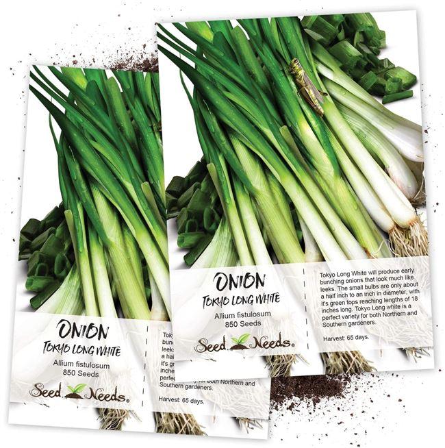 Высококачественный и питательный сорт от фирмы Allium Seeds — лук Румба: описание и характеристика
