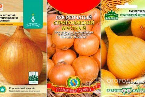 Лук сорта «Стригуновский»: описание и характеристика, агротехника выращивания и ухода за посадками, фото