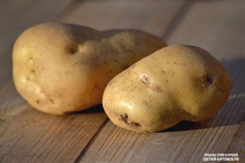 Новый сорт картофеля Бурновский вывели в Башкирии