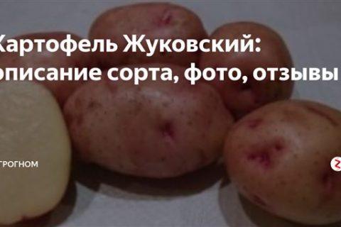 Сорта картофеля по алфавиту фото и описание с названиями – Для дачников