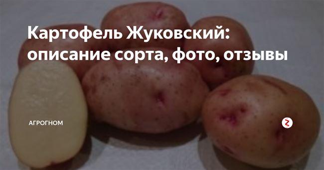 """Сорт картофеля """"Десница"""" - описание характеристики отзывы фото видео"""