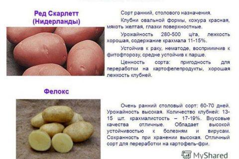 Сорта картофеля по алфавиту фото и описание.Вданной статьерассмотрим самые лучшие ипопулярные сорта картофеля в алфавитном порядке.