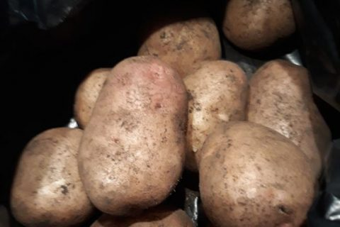 Картофель Ермак – описание сорта, фото, отзывы