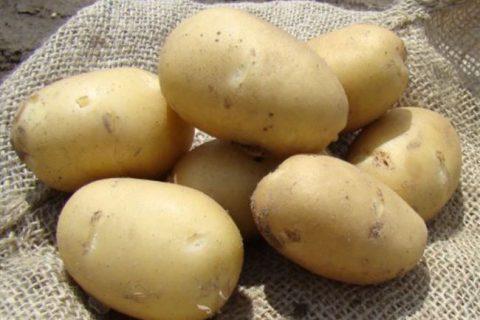 Сорт картофеля «Нальчикский» – описание и фото