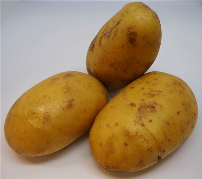 Обзор сорта картофеля Шелфорд