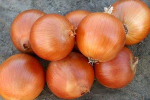 Лук Универсо F1 (1 млн. семян), семена, уход, посадка — уход, полив, посадка, разведение