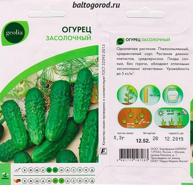 Огурцы сорта Засолочный: секреты выращивания