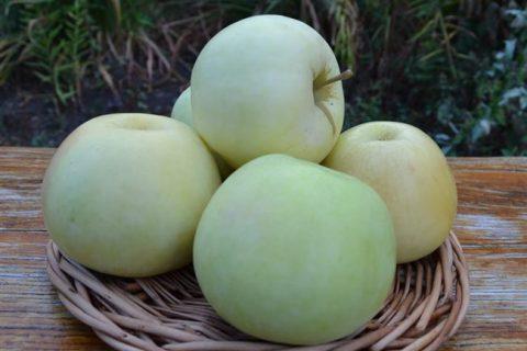 Бирский — сорт растения Картофель