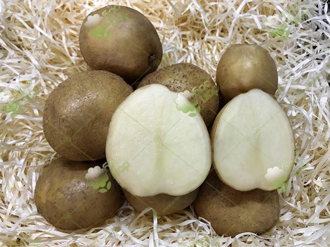Картофель воларе описание сорта