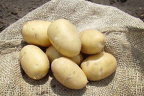 На Камчатке вывели высокопродуктивный картофель – Наука – Коммерсантъ