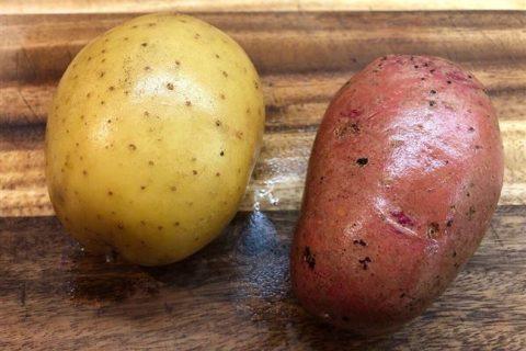 Картофель селекция — Германия | Сорта картофеля