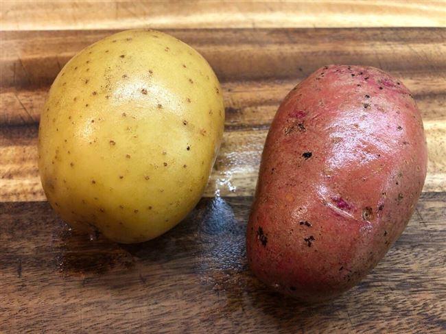 Какой сорт картофеля самый вкусный и урожайный — лучшие сорта на 2021 год
