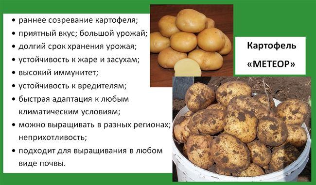"""Сорт картофеля """"Дубрава"""" - описание характеристики отзывы фото видео"""