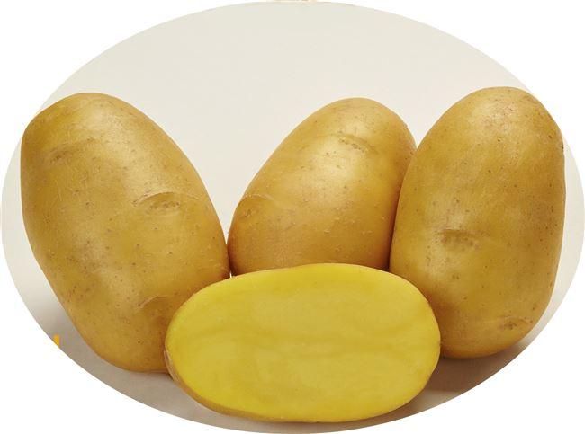 Сорт картофеля Захар