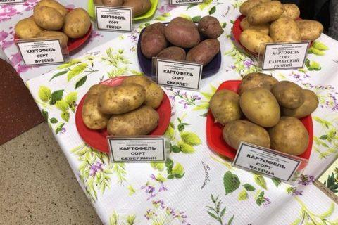 В этом разделе сайта мы обсуждаем Сорта картофеля.Здесь вы узнаете о ранних и поздних сортах. Рассмотрим классику и специфические варианты.