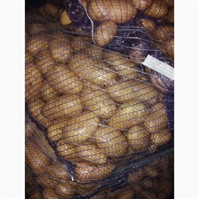 Картофель Леди анна