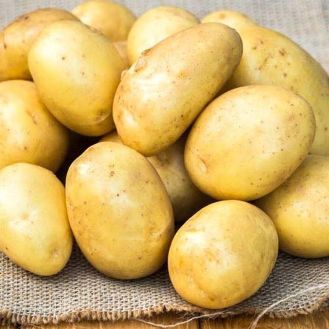 Кортни - сорт растения Картофель