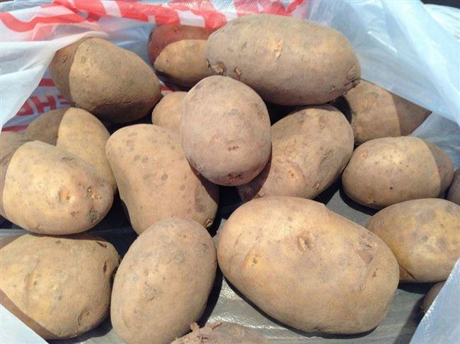 Картофель Леди Клэр