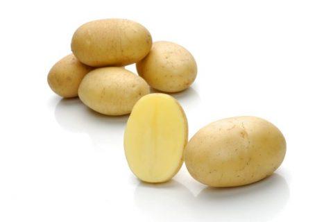 Сорт картофеля «Миранда» — Сорта Вики Ру