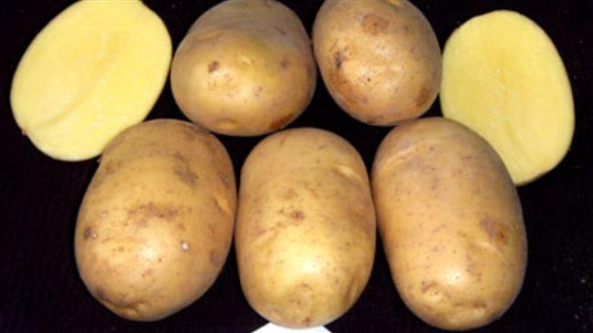 """Сорт картофеля """"Очарование"""""""