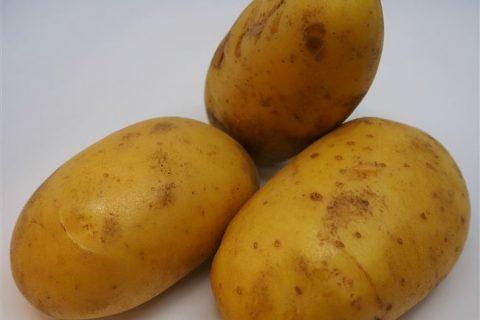Сорт картофеля «Призер» — Сорта Вики Ру