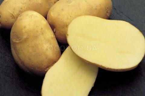 Сорт картофеля «Пушкинец» — Сорта Вики Ру