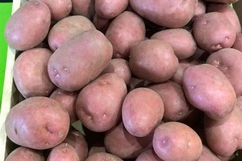 картофель нида описание сорта