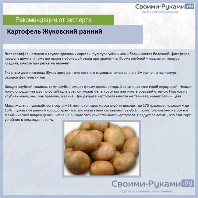 Ранний картофель: 16 лучших сортов: описание с фото и характеристикой