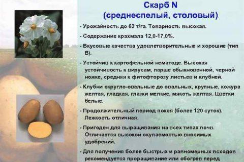 Казань | Специалистами ФГБНУ «ТатНИИСХ» созданы новые вирусоустойчивые сорта картофеля — БезФормата