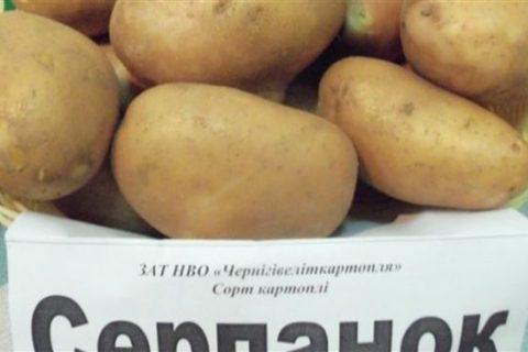 Картофель «Серпанок»: описание сорта, фото и основные характеристики украинской картошки Русский фермер