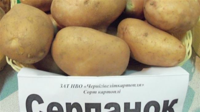 Урожайный подарок от украинских селекционеров — картофель Серпанок: описание сорта и отзывы