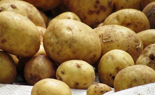 Сокольский - сорт растения Картофель