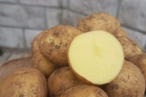 Картофель Таймер | Сорта картофеля