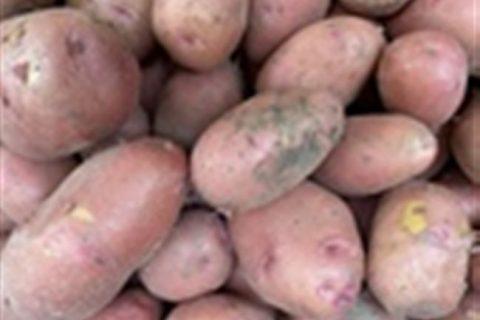 Картофель: Описание 73 Лучших сортов (Фото)+Отзывы — Krrot.net
