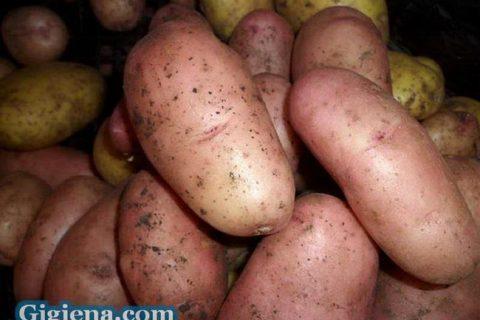 Картофель Пензенская скороспелка | Сорта картофеля