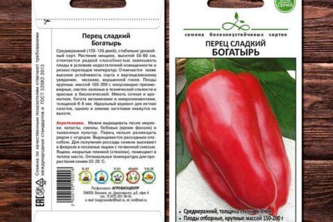 Перец Богатырь — характеристика и описание сладкого сорта, особенности выращивания рассады с отзывами