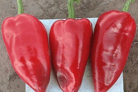 Трипл Стар — сорт растения Перец сладкий