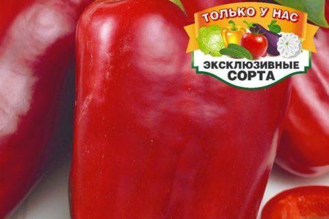 Перец сладкий Матрешка — фото урожая, цены, отзывы и особенности выращивания